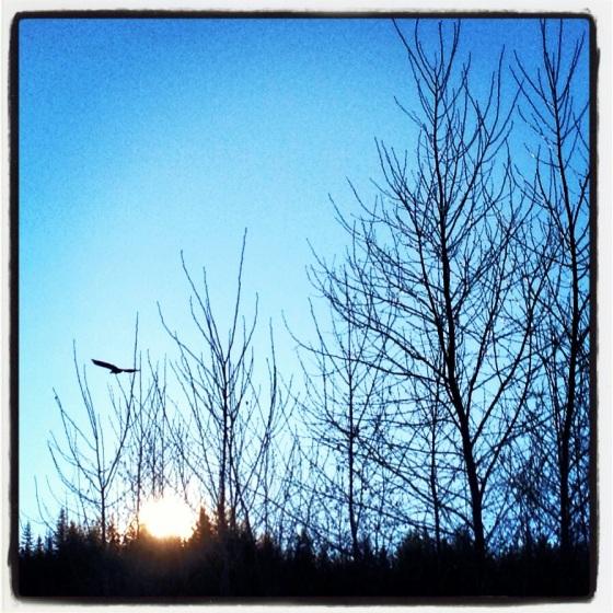 eaglesoar