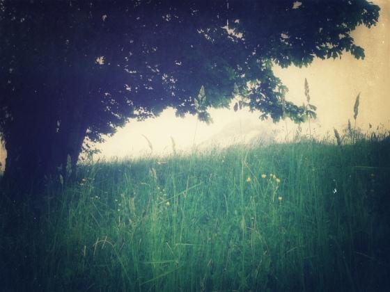 etherealgrass