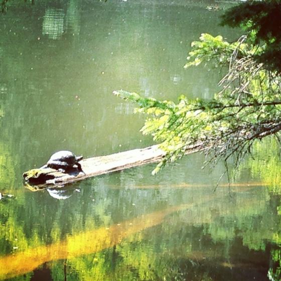 turtlelog