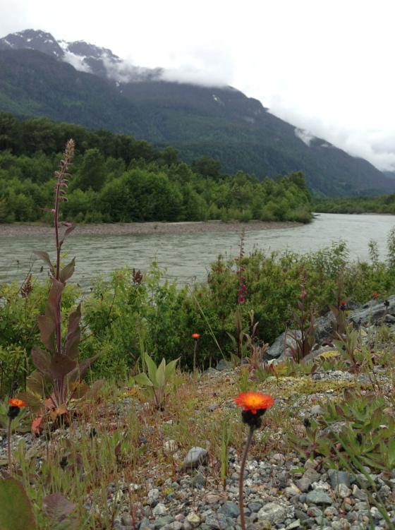 wildflowerriver